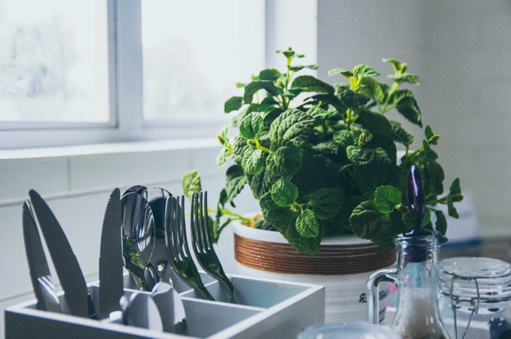 mint plant in kitchen with silverware