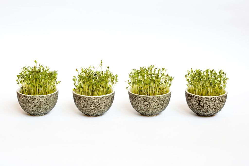 sprouts-in-bowl-containers